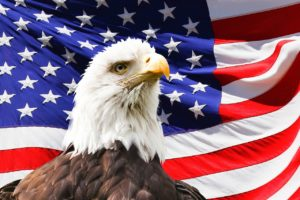 USAs flagg og nasjonalfuglen hvithodet havørn